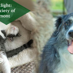 Humane Society of The Piedmont